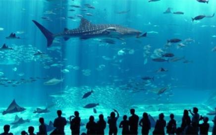 1582_istanbul aquarium